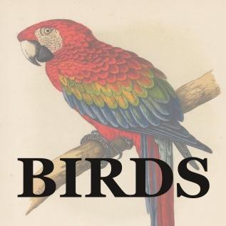 BIRDS link