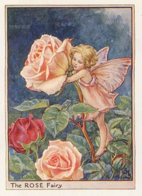 "Barker: Rose Fairy. c1920. An original chromo-lithograph. 3"" x 4""."
