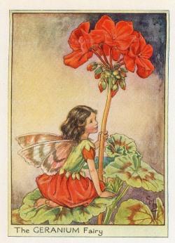 """Barker: Geranium Fairy. c1920. An original chromo-lithograph. 3"""" x 4""""."""