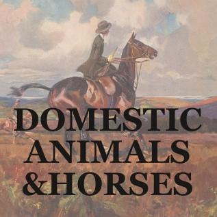 DOMESTIC ANIMALS HORSES link