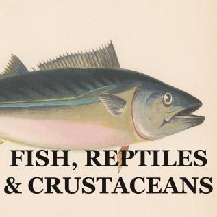 FISH, REPTILES & CRUSTACEANS