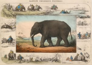 "Darton, 'Elephant', c.1820. An original lithograph. 13"" x 10"""