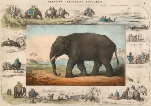 Darton: Elephant. Circa 1820. [NATHISp5733] SOLD