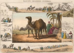 "Darton, 'Camels', c.1820. A hand-coloured original lithograph. 13"" x 10""."