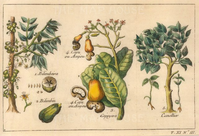 Bellin: Bilimbeira, Cashew and Cinnamon. 1749. A hand-coloured original antique copper-engraving. 7 x 5 inches. [NATHISp6768] SOLD