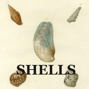 SHELLS link
