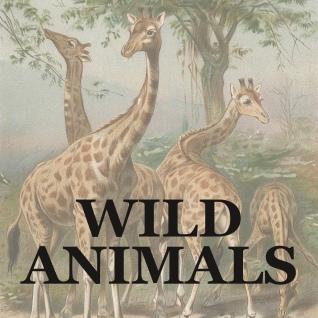 WILD ANIMALS link