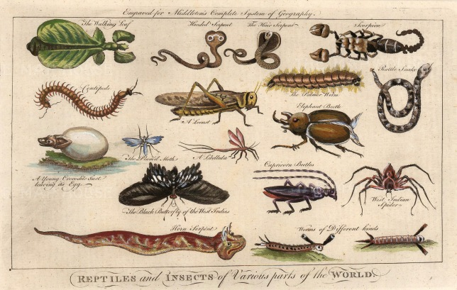 "Moll: Reptiles and Insects of the world. c1745. A hand coloured original antique copper engraving. 11"" x 8"". [NATHISp6562]"