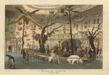"Papworth: Bullock's Museum.1816. An original colour antique aquatint. 8"" x 6"". [LDNp10278]"
