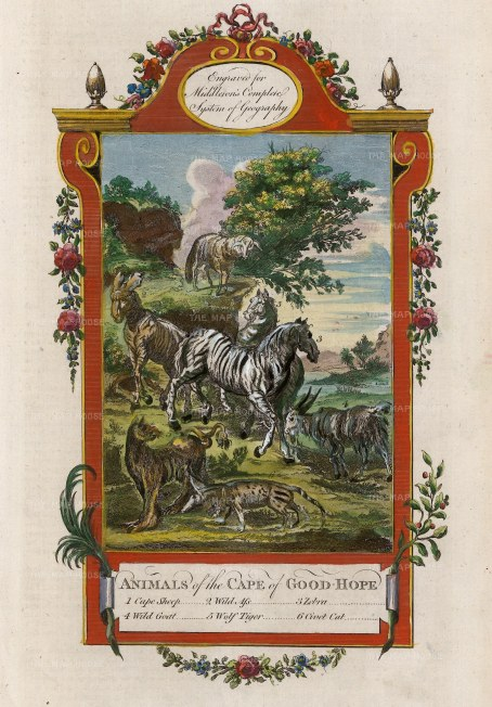 """Middleton: Animals of the Cape of Good Hope. 1778. A hand coloured original antique copper engraving. 7"""" x 12"""". [AFRp1377]"""