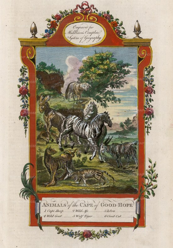 "Middleton: Animals of the Cape of Good Hope. 1778. A hand coloured original antique copper engraving. 7"" x 12"". [AFRp1377]"