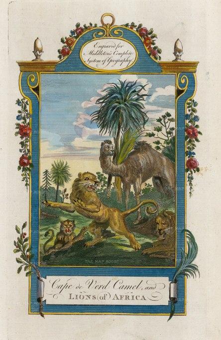 "Middleton: Animals of Cape Verde. 1778. A hand coloured original antique copper engraving. 7"" x 12"". [AFRp1378]"