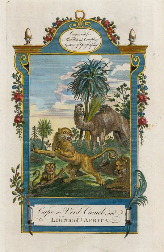 "Middleton: Animals of Cape Verde. 1778. A hand coloured original antique copper engraving. 7"" x 12"". [AFRp1378]"