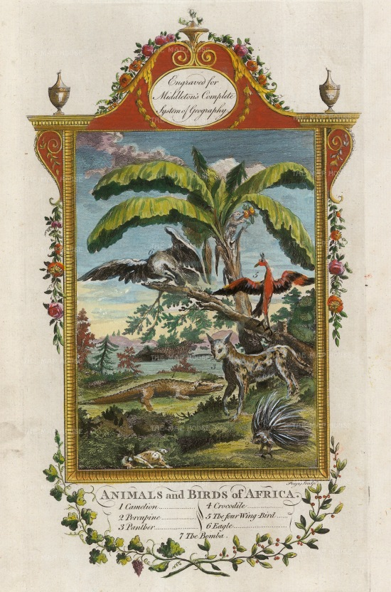 "Middleton: Animals & Birds of Africa. 1778. A hand coloured original antique copper engraving. 7"" x 12"". [AFRp1379]"