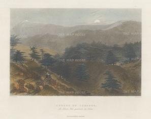Cedars of Lebanon.