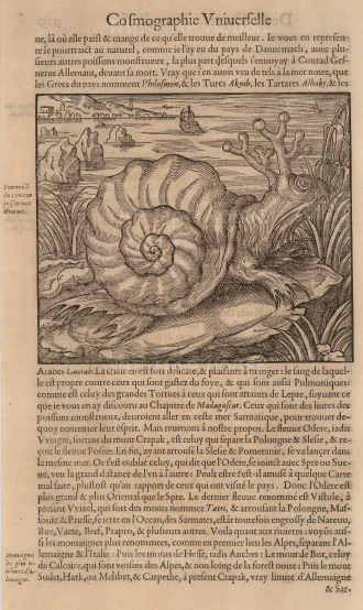 The mythical Sea Snail from the Baltic Sea was of considerable size with antlers, clawed feet, whiskers and claimed to be tasty to eat.