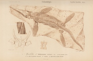 The amateur palaeontologist and fossil shop owner Mary Anning discovered the Iichthyosaurus, the first complete fossil found in England, in 1812.