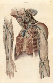 "William Home Lizars, Study of the nerves and vessels of the arms and neck, plate XI. c.1822. An original colour steel-engraving. 10"" x 17"". £POA."