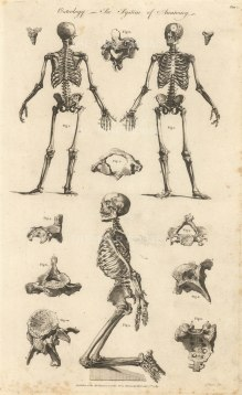 "Cooke: The Skeleton. 1789. An original antique copper engraving. 9"" x 14"". [NATHISp7284]"