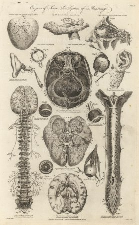 "Cooke: Sensory Organs. 1789. An original antique copper engraving. 9"" x 14"" [NATHISp7285]"