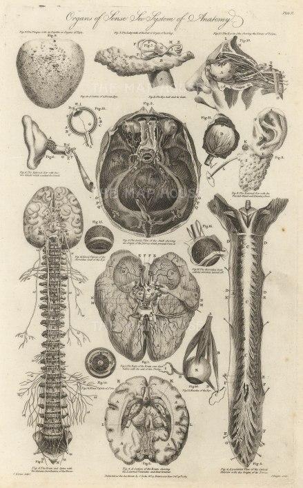 "Cooke: Sensory Organs. 1789. An original antique copper engraving. 9"" x 14"" [NATHISp7285]"