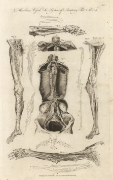 Cooke: Lymphatic System, 1789. An original copper engraving. 9 x 14 inches [NATHISp7286]