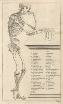 "Dr Mortherby. The Skeleton. 1775. An original antique copper engraving. 7"" x 12"". [NATHISp7288]"