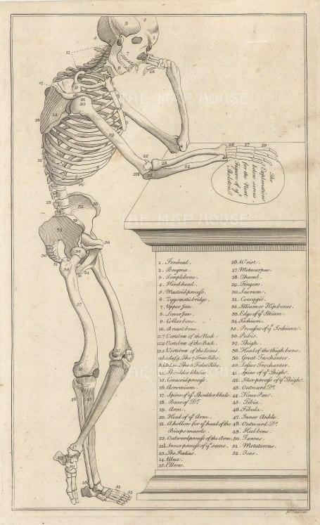 """SOLD Dr Mortherby. The Skeleton. 1775. An original antique copper engraving. 7"""" x 12"""". [NATHISp7288]"""