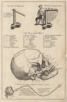 Dr Mortherby, The Skull, 1775. An original copper-engraving. 7 x 12 inches. [NATHISp7294]