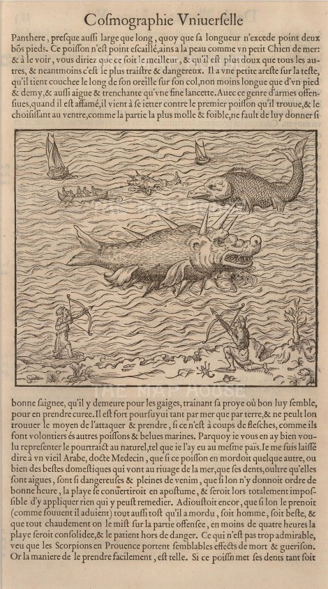 Andre Thevet: Sea monsters. 1575 An original black and white woodcut. 8 x 12 inches [NATHISp5438]