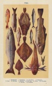 "Mrs Beeton, 'Fish', c.1910. An original chromo-lithograph. 4"" x 7""."
