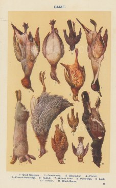 "Mrs Beeton, 'Game', c.1910. An original chromo-lithograph. 4"" x 7""."