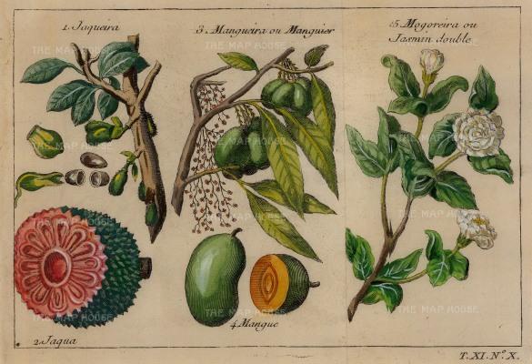 Bellin: Jackfruit, Mango and Jasmine. 1749. A hand-coloured original antique copper-engraving. 7 x 5 inches. [NATHISp6769]