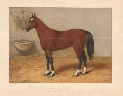 "General Tweedie: Arabian Horse. 1894. A rare original chromo-lithograph. 10"" x 7"" [NATHISp7164]"