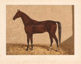 RARE: Lanercost. Bay Arabian Stallion, winner at Calcutta, Lucknow and Meerat 1886-88. After a portrait by James Clark.