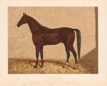 "General Tweedie: Arabian Horse. 1894. A rare original chromo-lithograph. 10"" x 7"" [NATHISp7166]"