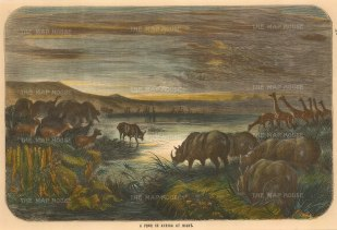 Animals in Africa: Gathered around a watering hole.