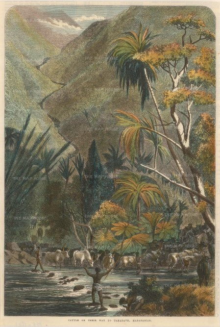 "Illustrated London News: Madagascar. 1864. A hand coloured original antique wood engraving. 9"" x 14"". [AFRp1341]"