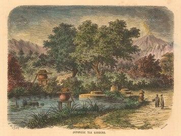 Collins: Japanese Tea Gardens. A hand-coloured original antique wood-engraving. 5 x 4 inches. [SEASp1552]
