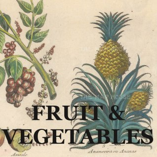 FRUIT VEG link
