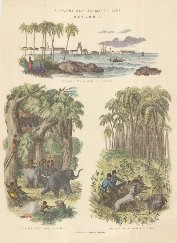 Anon: Sri Lanka. A hand-coloured orignal antique steel-engraving. [INDp1132] SOLD