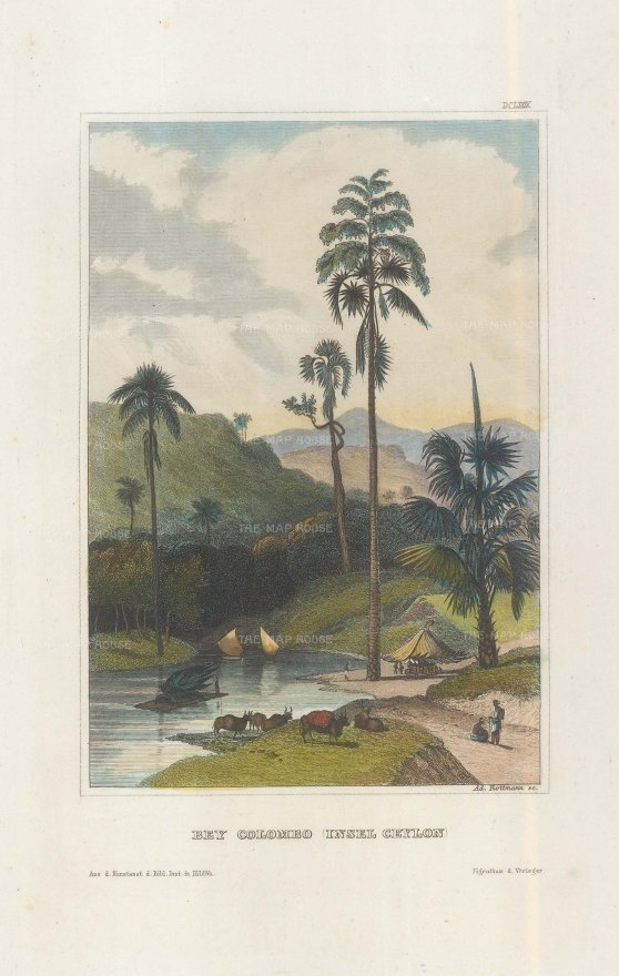 """Meyer: Colombo. 1854. A hand coloured original antique steel engraving. 5"""" x 7"""". [INDp1278]"""