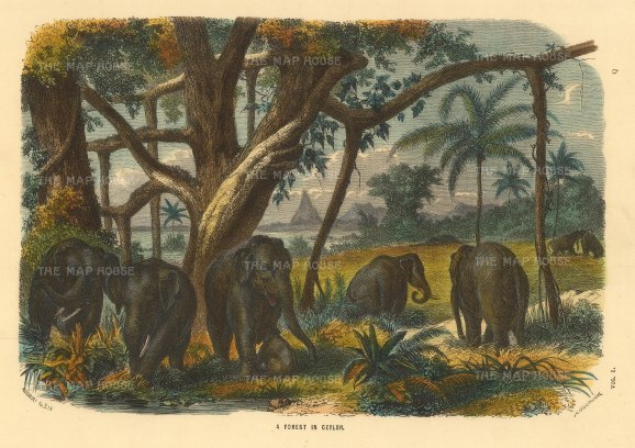 "Collins: Sri Lankan elephants. c1870. A hand coloured original antique wood engraving. 10"" x 7"". [INDp1394]"
