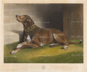 "Landseer: Hound. 1850. An original antique mixed method engraving. 24"" x 20"". [NATHISp2318]"