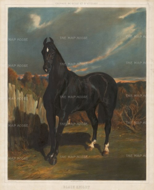 "Lemercier: Black Knight. 1860. An original colour antique lithograph. 20"" x 25"". [NATHISp2319]"