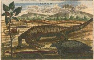 Nieuhoff: Crocodile, Sea Turtle and Snake. c1660. A hand coloured original antique copper engraving. [NATHISp5507]