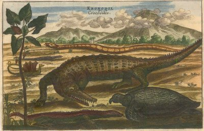 Nieuhoff: Crocodile, Sea Turtle and Snake. c1660. A hand coloured original antique copper engraving. [NATHISp5507]