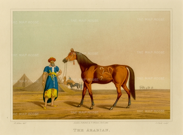"Alken: The Arabian. 1904. An original colour antique aquatint. 10"" x 8"". [NATHISp5669]"