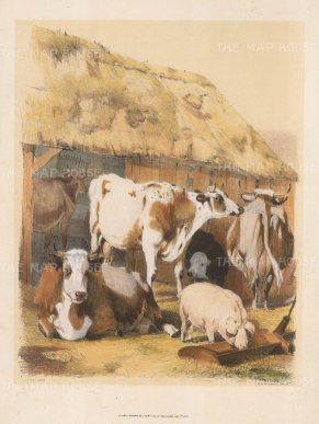 "Cooper: The Farm Yard. 1837. An original hand coloured antique lithograph. 13"" x 18"". [NATHISp5799]"