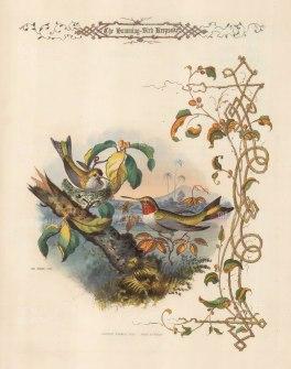 Northern Hummingbird pair.